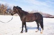 Кашемир,  помогите найти коня
